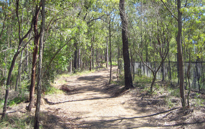 The Citriadora Trail was the first track constructed to let people walk from the botanic gardens to The Summit