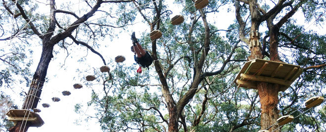 Tree Surfing At Arthurs Seat Melbourne