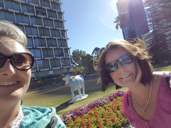 cow parade perth, perth city, things to do in november, cheese festival, festival forage, cow parade selfie
