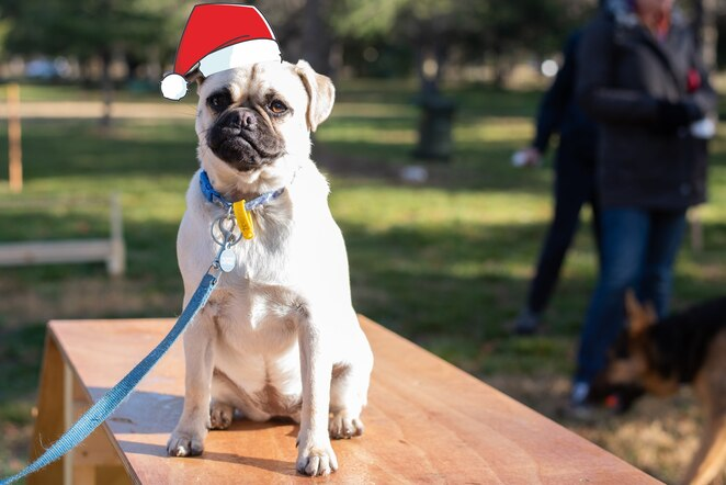 haigh park, braddon, dogs, christmas, events, 2019, ACT, city renewal authority, whats on, canberra, 2019,