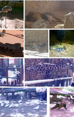 Animals of the Emirates Park Zoo
