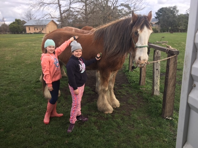Kids love to pat the horses and the horses love it too
