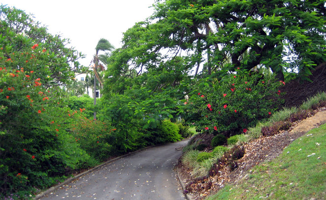 Path in Newstead Park