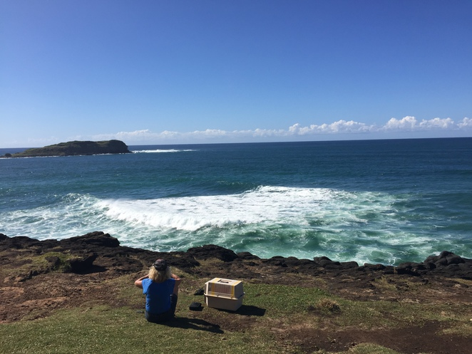 picnic beach tweed heads coast cliff getawayescape