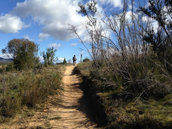 point hut crossing, bike riding, pine island, canberra, murrumbidgee river, walks, bushwalks, easy walks, murrumbidgee discovery track,