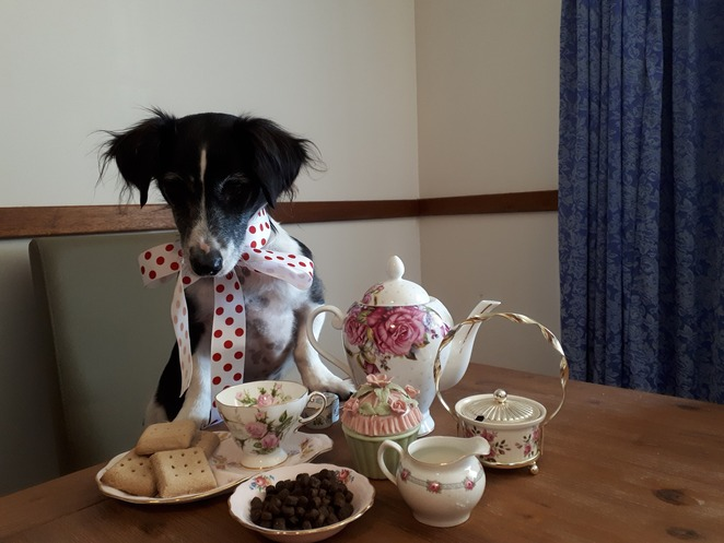 puppy tea pawty, Devonshire tea, Kingston house, George Kingston, colonal light, history, south Australia, Kingston park, furrbaby, pupcakes, scones, jam, cream, competition, activities, on lead