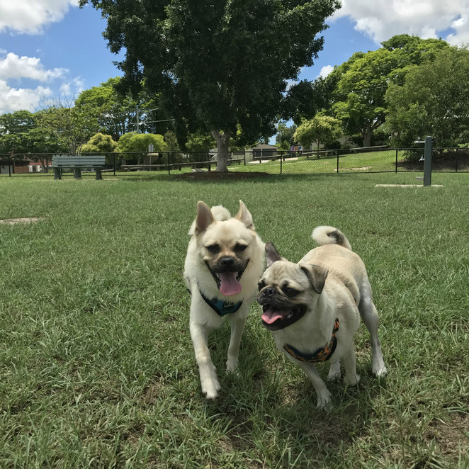 road safety, road trip, brisbane, australia, dog friendly, travelling with a pet, holiday, vacation, accommodation, pet friendly, hotel, motel, air bnb, tips, car, safety, racq, interstate