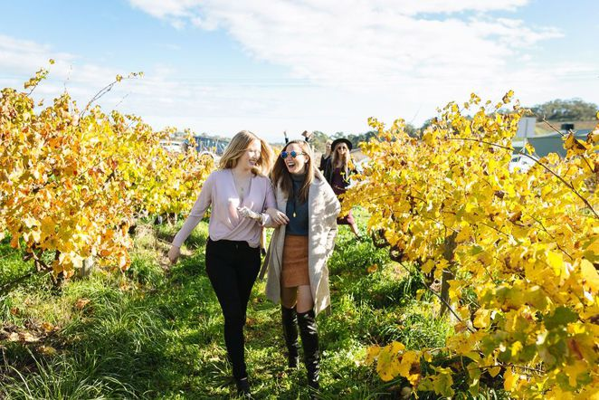 sea and vines, mclaren vale sea and vines, sea and vines festival, mclaren vale, food and wine, fun things to do, transport yourself
