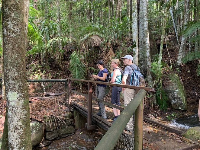 Witches Falls Circuit Hike in Tamborine Mountain, Queensland, Witches Chase Trail, Tamborine Mountain, Palm Grove section Hike, The knoll Section Hike, Joalah Section Hike, Spice of Life Café in Tamborine, Group Hiking South East Qld and More,