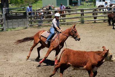 Classic Rodeo You won't miss