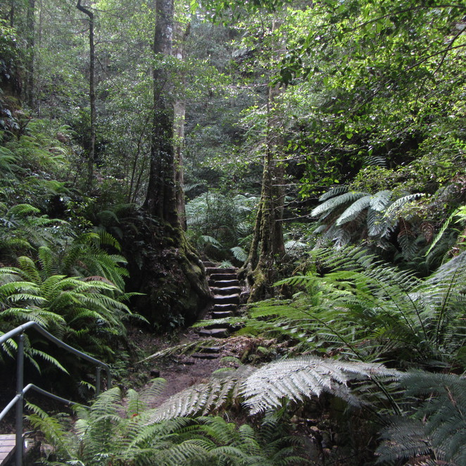 Adventure, Blue Mountains, rainforest, camping, hiking, photos