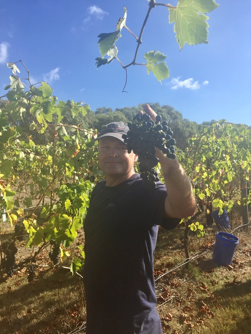 Banks Road vineyard winery winemaker