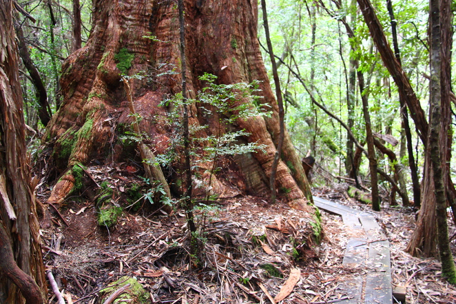 Camping in Tasmania's south west and walking the beautiful forests