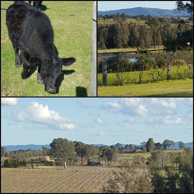 Hunter Valley, vineyards, views, country, scenic