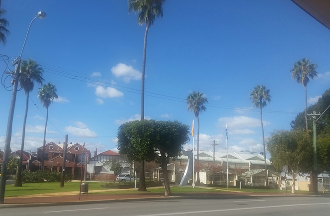 palm trees william street northbridge tropical