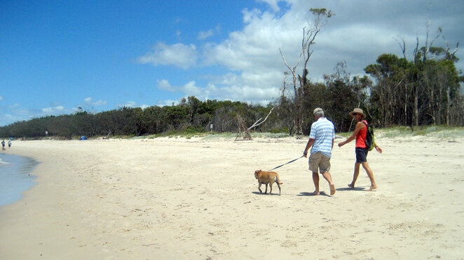 Dog walking on Bribie Island