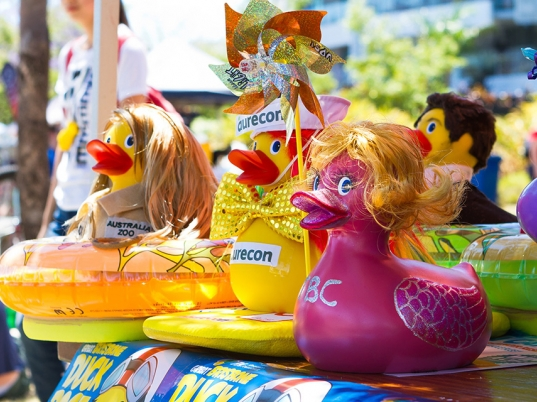 support the duck race, great brisbane duck race, cancer charity, old cancer council