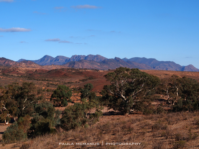 the view from Brachina Lookout, Brachina Gorge, Flinders Ranges