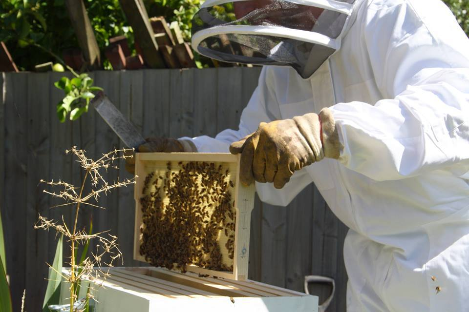 Beekeeping,Beekeeping For Beginners,Beekeeping Courses,Beekeeping Clubs  Melbourne,Beekeeping Courses Victoria