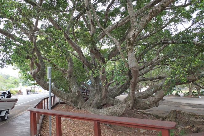 Bohemian Bungalow Restaurant & Bar, Eumundi, historical town, heritage-listed fig trees, funky decor, Bohemian decor, indoor and outdoor dining, dogs allowed outdoors, lunch, breakfast, dinner, special occasions, weddings, smoker on site, a little unconventional, a little different
