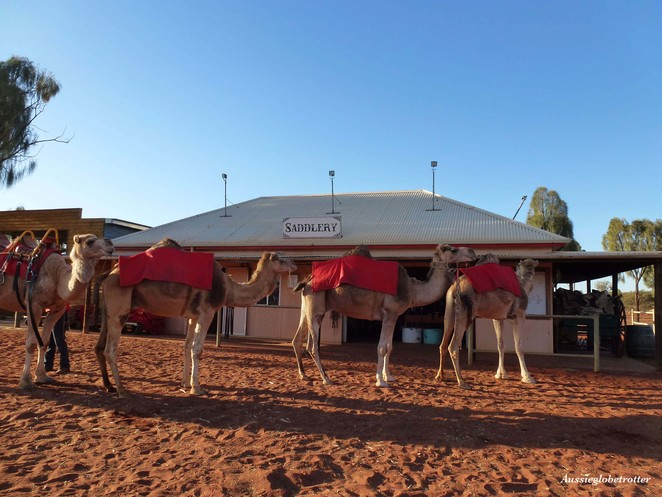 Camel, Uluru, Tour, Ayers Rock, Northern Territory, Sunrise, Sunset