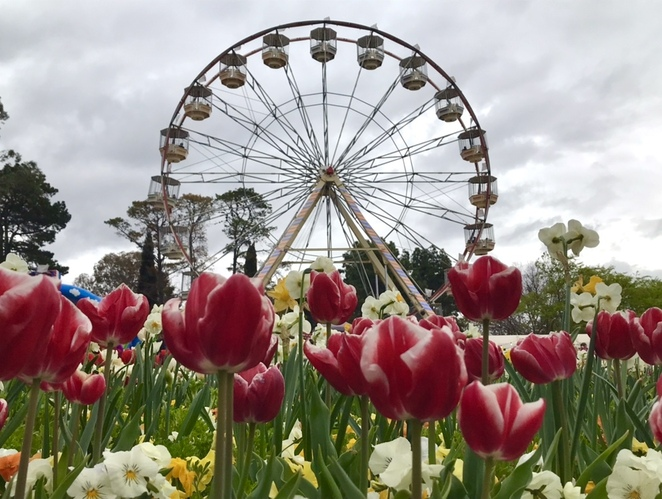 Canberra, spring, bucket list, things to do, flowers, Floriade