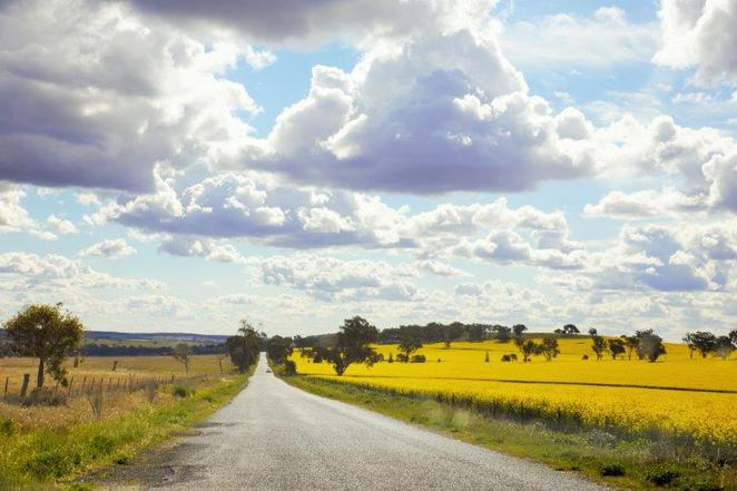 fields of canola, enroute to mudgee, discover country nsw, driving in country nsw with kids,