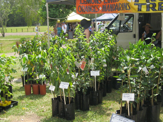 sunshine coast, nursery, garden, plant, centre, plants, pots