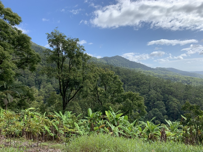 The Cream Track, Serenity Farm, Highland Cattle, Gold Coast Hinterland, Tallebudgera Valley, Springbrook Plateau, Goomoolahra Falls, English Garden Café, Hideaway Café, Hiking South East Qld and More, Hiking trails at Tallebudgera, Scenic Drive, Banana plantations