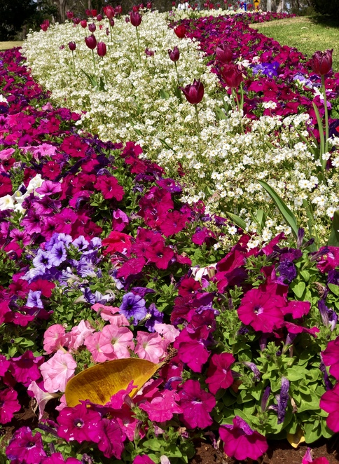 The 2020 Toowoomba Carnival of Flowers is going ahead!