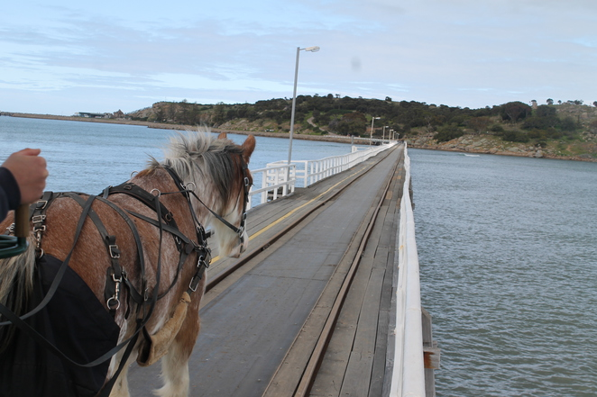 Victor Harbor, Fleurieu Peninsula, Whales, Little Penguins, Granite Island, Horsedrawn Tram, Family Fun, Kid Friendly, City Escape