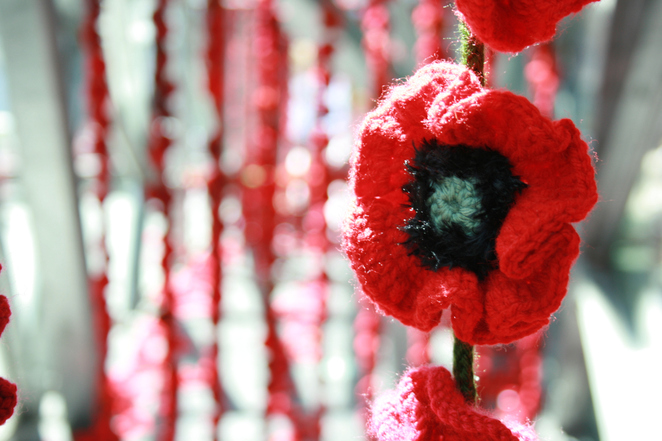 5000 poppies, crocht poppies, anzac day, 2020, things to do at home, anzac day events cancellend, coronavirus, 2020,