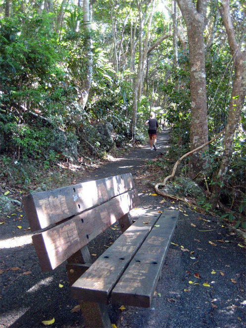 Walking path in the Burleigh Heads National Park