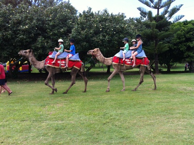 Coffs Coast Camels