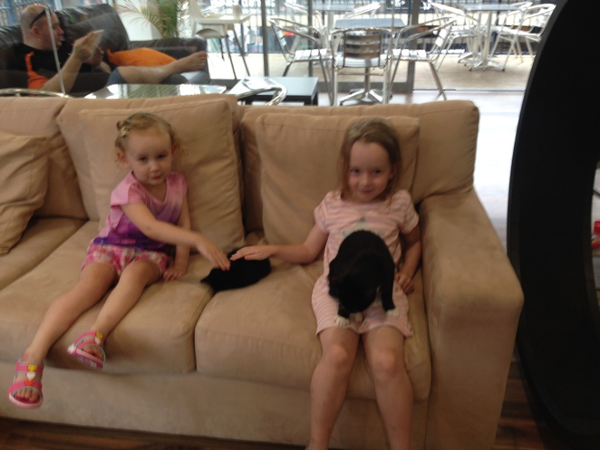 Crazy cat cafe, surfers paradise, cats, kitty cats, cafes in surfers paradise, cat cafe in surfers paradise, Gold Coast cafes, cafes, coffees, I love cats, cat cafe