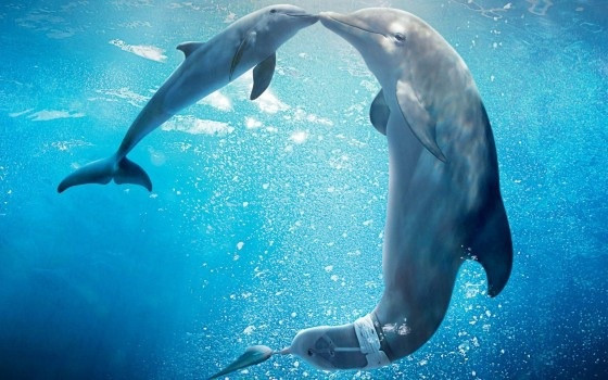 Dolphin Tale 2, October Half Term releases