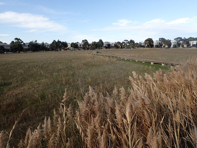 Epsom Conservation Reserve, Mordialloc, park, grassland, walk, nature, walking track, outdoor,