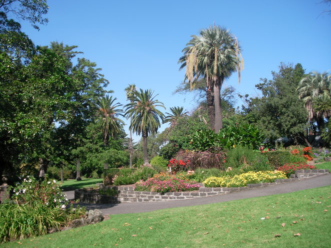 flowers trees palm footscray park