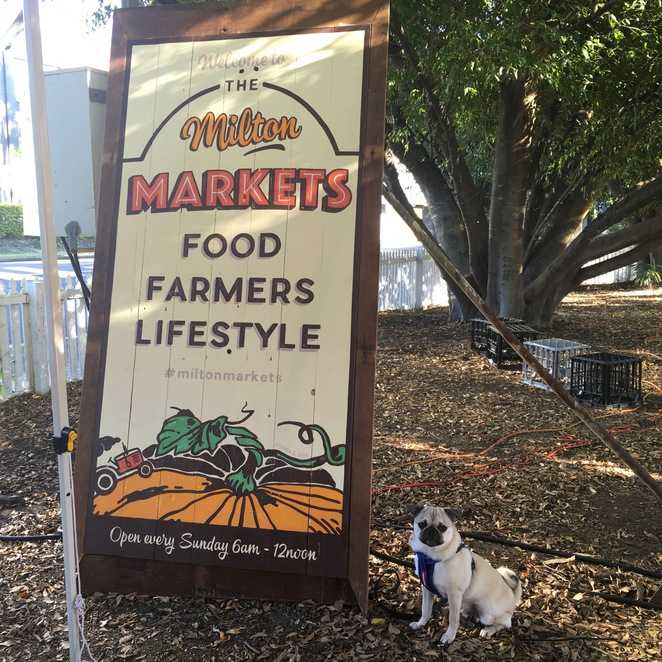 markets, brisbane markets, dog friendly, dog friendly markets, milton markets, carseldine markets, kelvin grove village markets, dog treats, dog ice cream, hugo's ice creamery, soapy moose, the soapy moose, jojo and lola's jerky chompers, cherry pie's delights, nundah markets