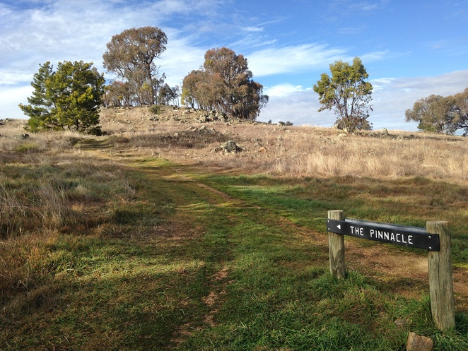 the pinnacle, nature trail, bushwalks, hikes, short walks, easy walks, canberra, ACT, nature reserves, kangaroos,