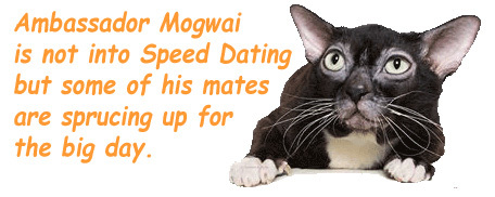 from Bennett valentines day speed dating perth
