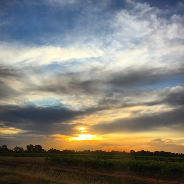 Barossa, Adelaide, Winery, Best, S.A, Events, Tour, Cheese, Vineyard