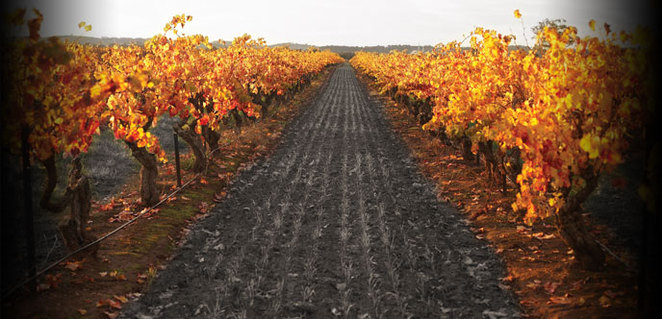 Barossa, Saltram, Adelaide, Winery, Best, S.A, Events, Tour, Cheese, Vineyard
