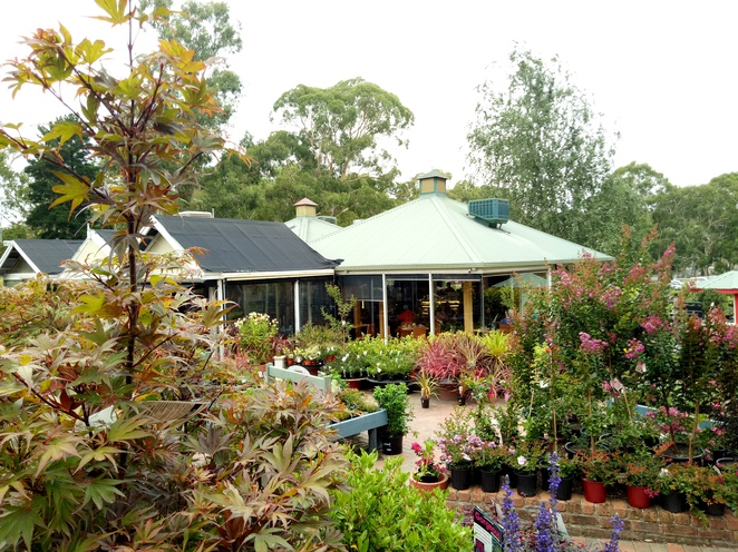 beasleys teahouse, nursery, cafe, plants, gardening supplies, outing, family outing, east doncaster, melbourne, places to visit, flowers, garden, landscaping supplies