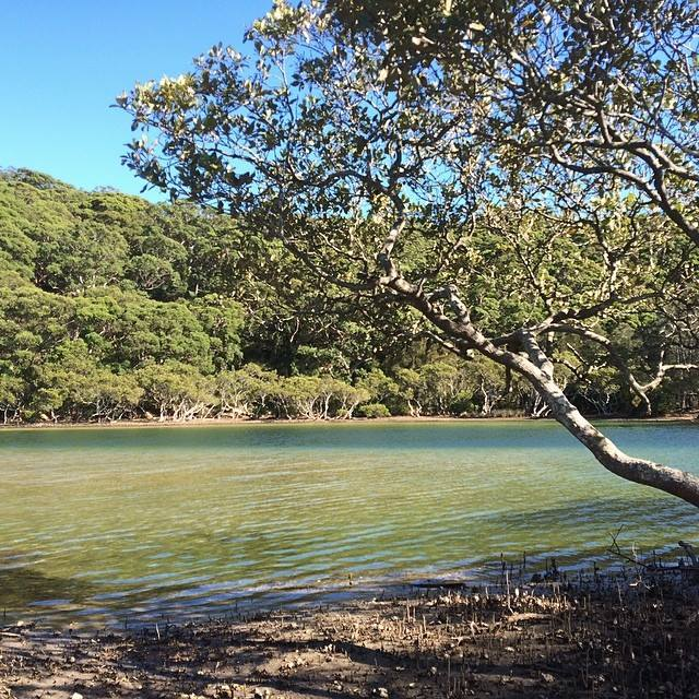 bonnie vale, royal national park, port hacking, river, maianbar, bundeena, camp, mangrove, river, simpsons bay