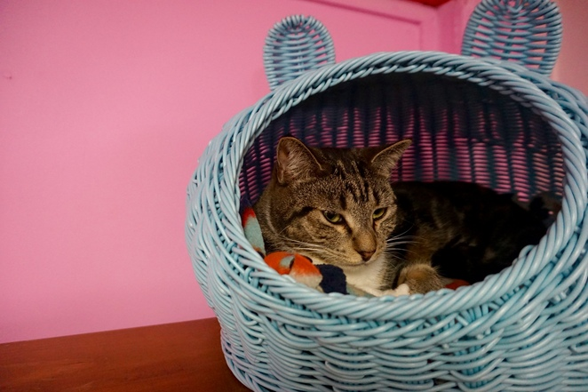 Cherry in a basket