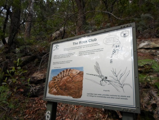 crosslands reserve, great north walk, place of winds, interpretive trail, benowie walking track, berowra valley national park