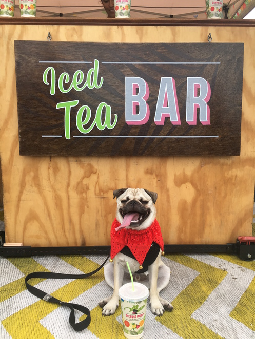 diegos drop, iced tea, markets, brisbane, dog friendly, pug, drinks, jan powers farmers market, iced tea, summer, bar
