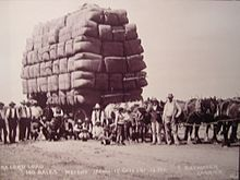Draughthorses pulling the wool to Melbourne - Wiki Photo