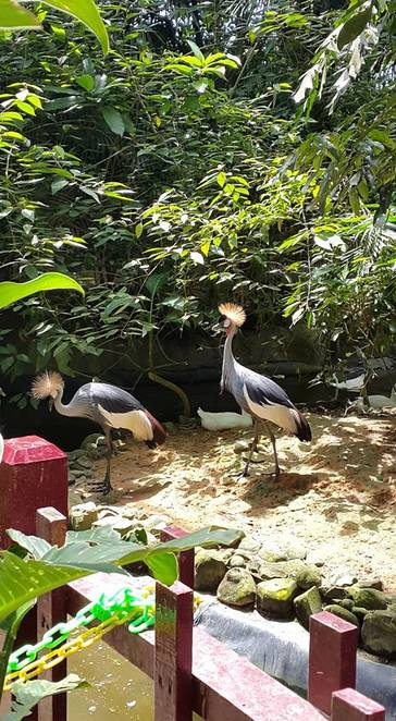 food, vegetables, pellets, fish, animals, langkawi, wildlife park, nuts, peanuts, nature, crane, aviary, greycrown crane